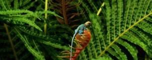 Atualização Jurídica - Direito Ambiental - Políticas Públicas Ambientais