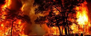 Crimes Contra o Meio Ambiente - Gratuito