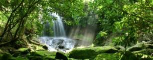Gestão Ambiental - Diversidade de Ecossistemas no Brasil - Gratuito