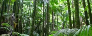 Gestão Ambiental - Diversidade de Ecossistemas no Brasil