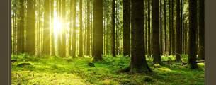 Educação Ambiental - Inserção Curricular