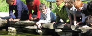 Educação Ambiental como Instrumento de Sustentabilidade - Gratuito