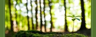 Novo Código Florestal e Política Ambiental - Gratuito