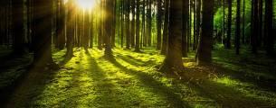 Responsabilidade Civil, Administrativa e Penal em Matéria Ambiental - Gratuito