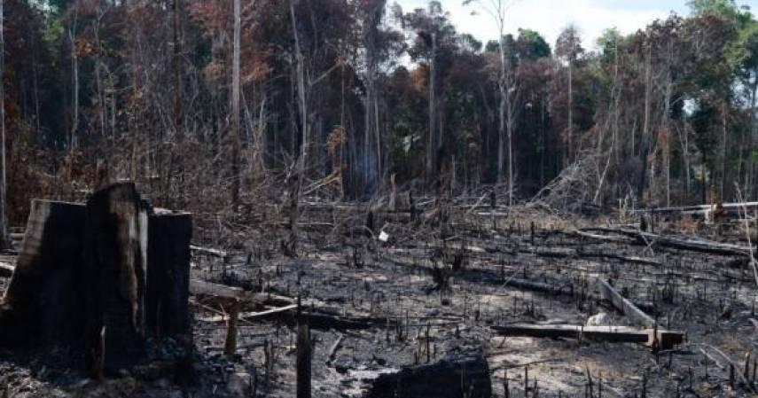 Desafios Ambientais no Brasil Atual
